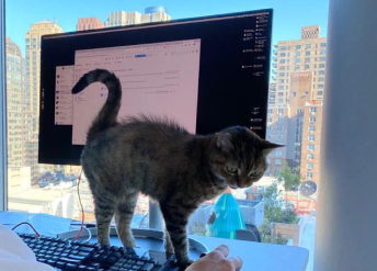 A cat walks in front of a computer monitor on David's desk