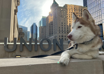 Mo's dog, Ranger, poses in an urban setting